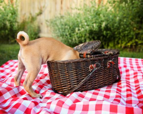 puppy not practicing asteya non-stealing