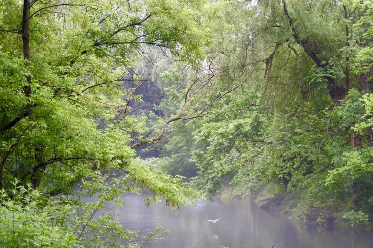 trees over river